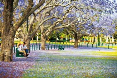 Top Things To Do In Brisbane This Spring